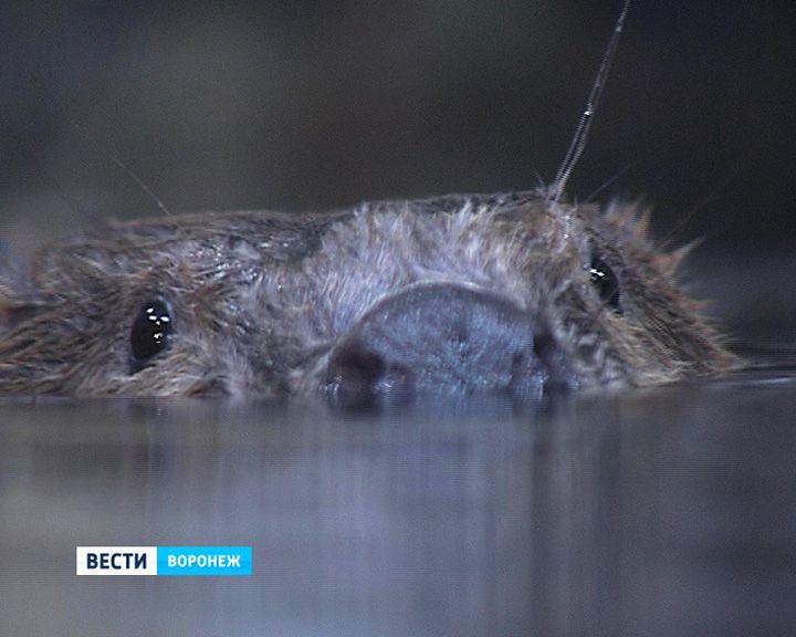 В Воронежском заповеднике посетители смогут увидеть животных в естественных условиях обитания