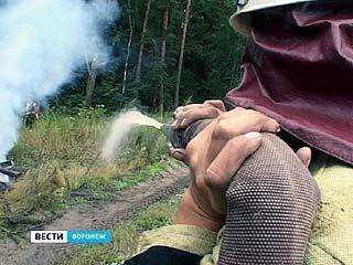 В Воронежском биосферном заповеднике прошли учения пожарных