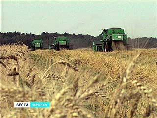 В Воронежском регионе прогноз по сбору зерновых - благоприятный