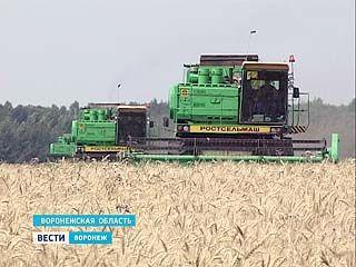 В Воронежском регионе собран первый миллион тонн зерна