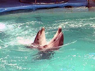 В Воронежском цирке начинает работу шоу дельфинов