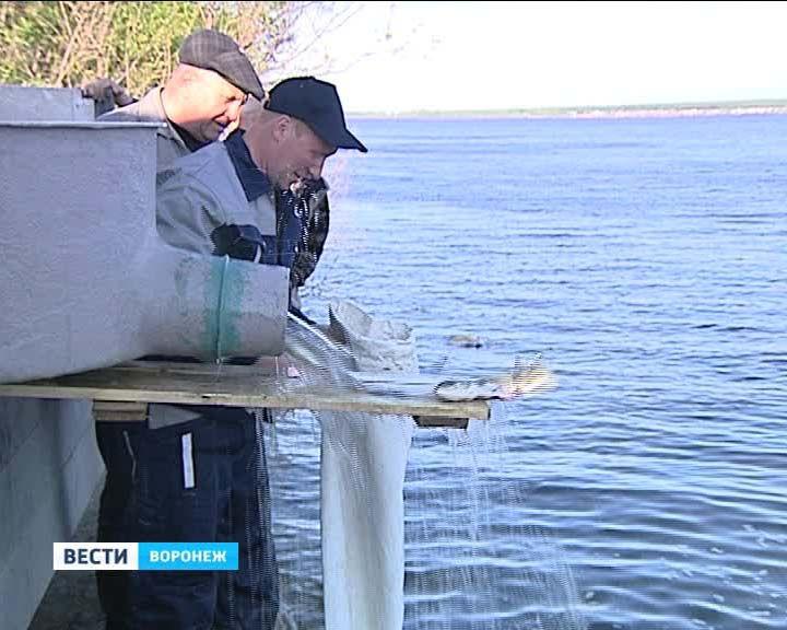 В Воронежском водохранилище стало больше белого амура, сазана и толстолобика