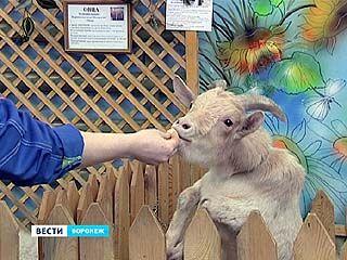"""В Воронежском зоопарке будут выступать """"пенсионеры"""""""