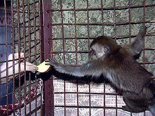 В Воронежском зоопарке готовятся к Новогодним представлениям