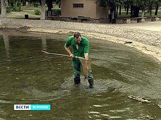 В Воронежском зоопарке начался сезон подкидышей