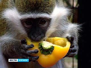 В Воронежском зоопарке опасаются за здоровье мартышек и макак