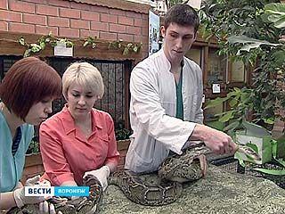В Воронежском зоопарке выстроилась очередь к ветеринару