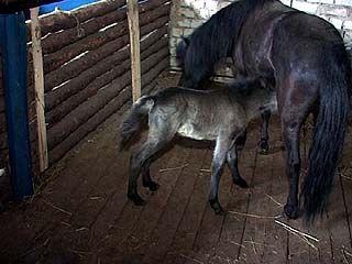 В Воронежском зоосаде - бум рождаемости