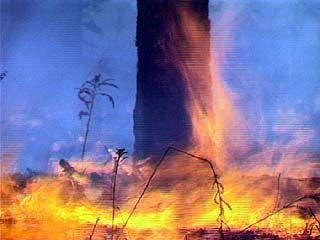 В Воронежской области борьба с огнём продолжается