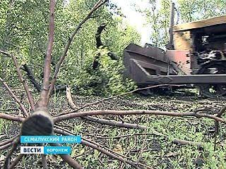 В Воронежской области гектарами выкорчёвывают плодовые деревья