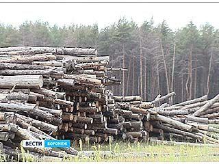 В Воронежской области гибнут защитные леса