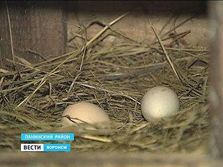 В Воронежской области готовятся выращивать самую чистую - органическую еду
