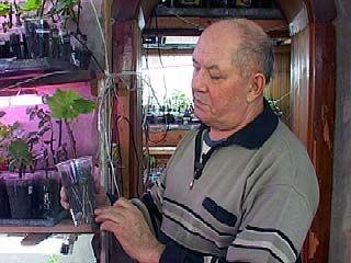 В Воронежской области можно выращивать элитные сорта винограда