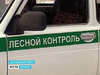 В Воронежской области на грани исчезновения не только лесные массивы, но и лесники