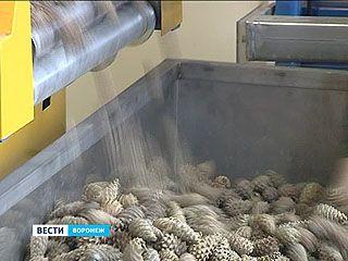 В Воронежской области начали заготовку семян для будущих лесов