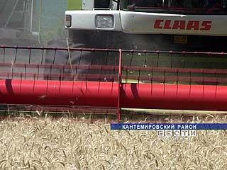 В Воронежской области негде хранить зерно нового урожая