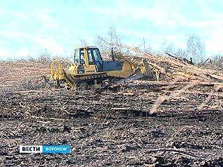 В Воронежской области планируют уже через 1,5 года расчистить пострадавшие от огня леса