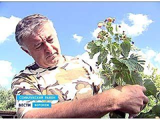 """В Воронежской области подвели итоги конкурса """"Начинающий фермер"""""""