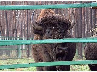 В Воронежской области появится свой сафари-парк