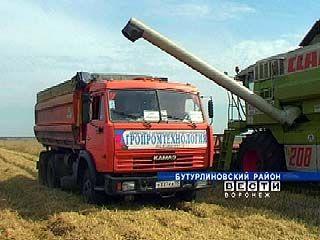 В Воронежской области продолжается уборочная кампания