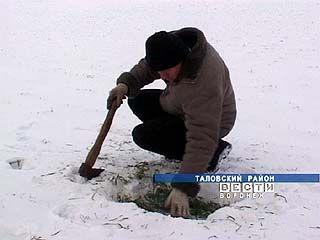 В Воронежской области сложилась критическая ситуация с посевами озимых