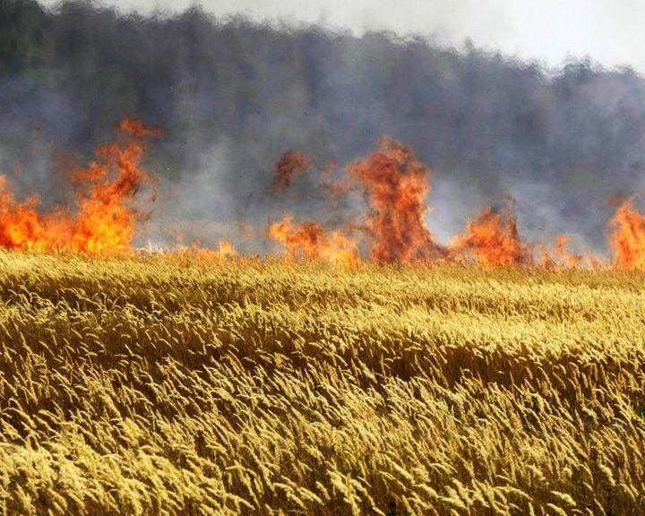 В Воронежской области сотрудники МЧС помогают аграриям спасать урожай