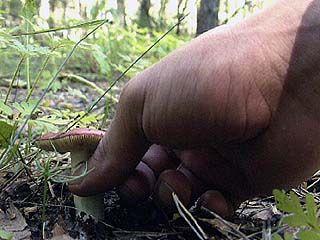 В Воронежской области возобновились грибные отравления