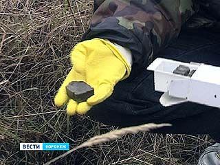 В Воронежской области зафиксирован резкий рост заболевания бешенством