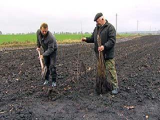 В Воронежской области завершаются лесовосстановительные работы
