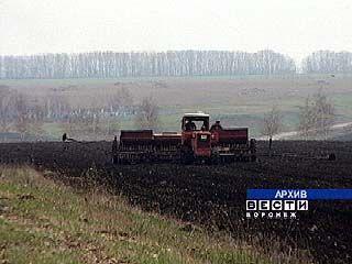 В Воронежской области завершен сев ранних зерновых
