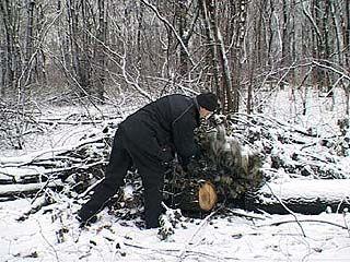 В Ясенках вырубают лесной массив