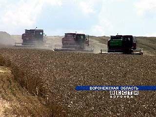 В южных районах области приступили к обмолоту зерновых