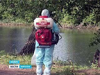 В южных районах Воронежской области открыли охоту на комаров