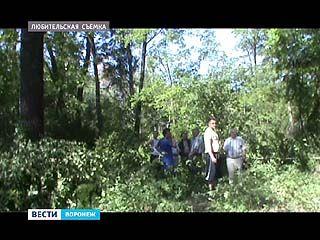 """В жилом массиве """"Задонье"""" местные жители встали на защиту столетних дубов"""