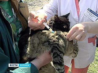 Ветеринары и лесники получили 40 тысяч доз вакцины от бешенства животных