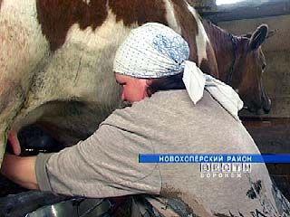 Владельцы ЛПХ Новохоперского района продают молоко за бесценок