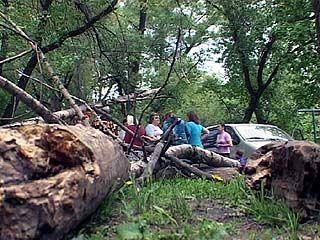 Во время урагана в Воронеже пострадали два ребенка