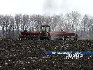 Воробьёвские хозяйства приступили к посевной позже обычного