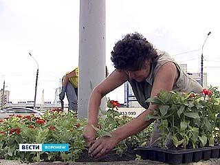 Воронеж готовится превратиться в цветущий сад