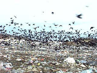 Воронеж может погрязнуть в мусоре