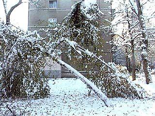 Воронеж оказался во власти стихии