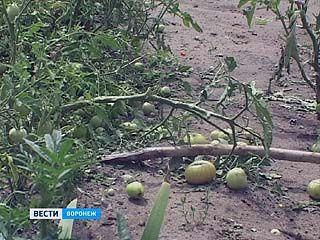 Воронеж пережил настоящее нашествие стихии