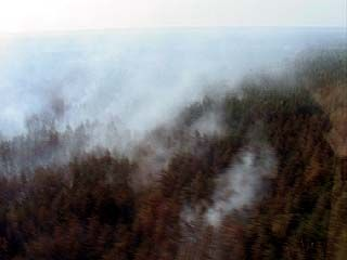 Воронежская область из-за пожаров потеряла 3.500 гектаров леса