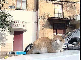 Воронежская область надеется получить средства на переселение из ветхого жилья