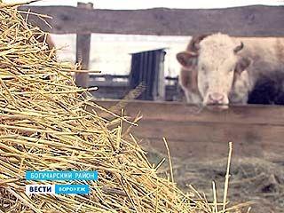 Воронежская область снова в окружении вспышек АЧС