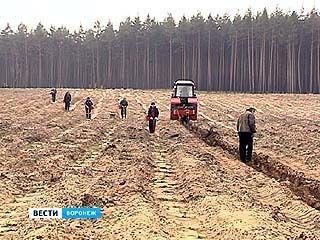 Воронежская область стала зеленей на 65 тысяч деревьев и кустарников