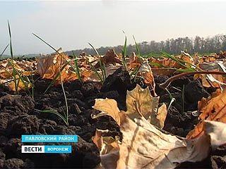 Воронежские аграрии подсчитывают убытки - озимые не всходят из-за засухи