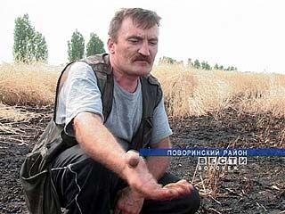 Воронежские крестьяне становятся перестраховщиками