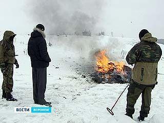 Воронежские наркополицейские уничтожили партию наркотических веществ