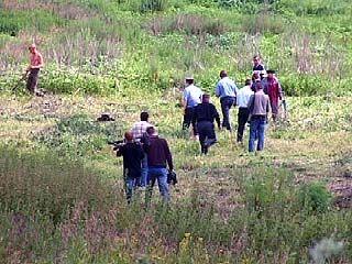 Воронежские наркополицейские уничтожили три гектара конопли